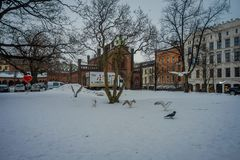 OSLO, NORWAY - MARCH, 26, 2018: Outdoor view of some birsd in the snow in front of Domkirke Cathedral in Oslo at Oslo. Norway Royalty Free Stock Photography