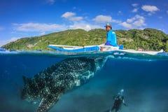 OSLOB, FILIPINAS - 1 DE ABRIL DE 2014: Tiburón de ballena grande, pescador Imágenes de archivo libres de regalías