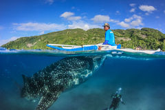 OSLOB, PHILIPPINES - APRIL 01 2014: Large Whale Shark, Fisherman Royalty Free Stock Images
