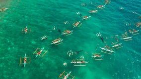 Oslob valhaj som håller ögonen på i Filippinerna, Cebu ö arkivfilmer