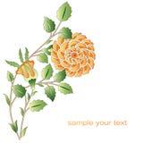 Osmańskie żółtych róż kwiatu serie Ilustracji
