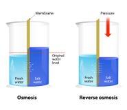 Osmos och omvänd osmos Fotografering för Bildbyråer