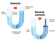 Osmose en Omgekeerde osmose Stock Foto's