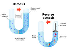 Osmosis and Reverse osmosis. Osmosis - diffusion of fluid through a semipermeable membrane from a solution with a low solute concentration to a solution with a Stock Photos