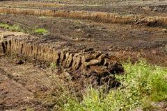 Osnabruecker land (Tyskland) - plockning av torv Arkivfoton