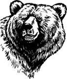 oso Fotos de archivo