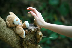 Oso con la mano en árbol Imagen de archivo