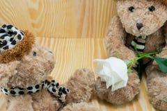 Oso de Brown con la flor de las rosas blancas del amor imagenes de archivo