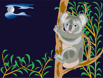 Oso de Koala Foto de archivo