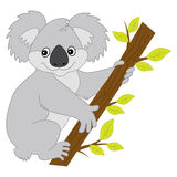 Oso de koala del vector libre illustration