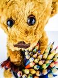 Oso de peluche con el primer de los lápices Foto de archivo
