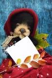 Oso de peluche de la felpa con una hoja para escribir el texto en un sombrero caliente de Borgoña entre las hojas de otoño en un  Fotos de archivo