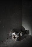 Oso de peluche perdido Fotos de archivo