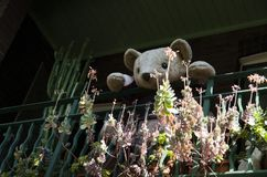 Oso de peluche que le mira de balcón Surry Hills, Sydney Imágenes de archivo libres de regalías