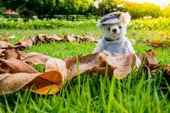 Oso de peluche que se sienta en el parque Concepto de familia Fotos de archivo libres de regalías