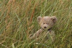 Oso del peluche en hierba Imágenes de archivo libres de regalías