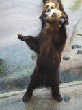 Oso en parque zoológico fotografía de archivo