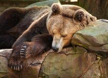 Oso en parque zoológico de la ciudad Imagen de archivo libre de regalías