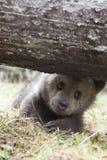 oso feliz del bebé debajo del árbol Imágenes de archivo libres de regalías