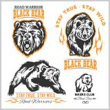 Oso negro para el logotipo, el emblema del equipo de deporte, los elementos del diseño y las etiquetas Fotografía de archivo