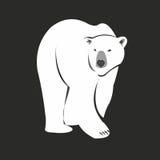 Oso polar Fotos de archivo libres de regalías