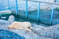 Oso polar en un parque zoológico Fotografía de archivo