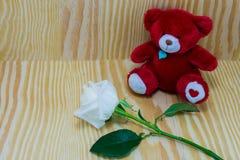 Oso rojo con la flor de las rosas blancas del amor imagen de archivo