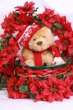Oso y poinsetta de la Navidad Imágenes de archivo libres de regalías