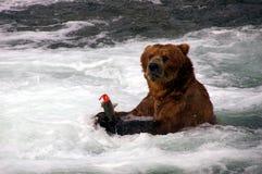 Oso y salmones del grisáceo Fotografía de archivo libre de regalías