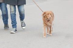 Osoba biega z psem obrazy stock