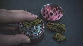 Osoba chwyta marihuany medyczny ostrzarz w jego r?ce i p?czki obraz stock