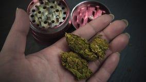 Osoba chwyta marihuany medyczny ostrzarz w jego r?ce i p?czki zdjęcia stock