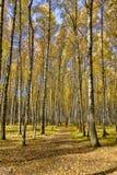 Osoba iść wzdłuż jesieni alei fotografia royalty free