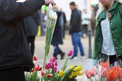 Osoba kupuje kwiatów tulipany Obraz Stock