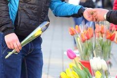 Osoba kupuje kwiatów tulipany Zdjęcia Royalty Free