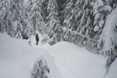 Osoba snowshoeing na snowshoe śladzie na Cyprysowej górze Obraz Stock