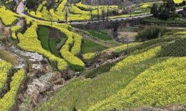 Osobliwy wzór komponował żółte i zielone rośliny Zdjęcie Royalty Free