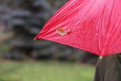 Osoby mienia mokry parasol z jesień liściem outdoors obraz stock
