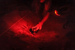 Osoby mienia ridley dennego żółwia Oliwny hatchling w ręce Fotografia Royalty Free