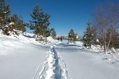 Osogovo berg, Bulgarien, Europa Royaltyfri Fotografi