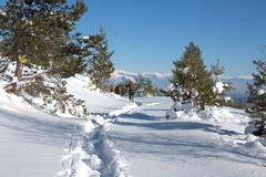 Osogovo berg, Bulgarien, Europa Arkivfoton