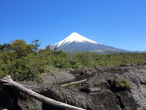 Osorno vulcan, chile Stock Images