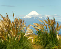 Osorno Waves of Amber Stock Images