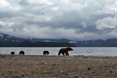 osos imágenes de archivo libres de regalías