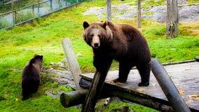 2 osos fotografía de archivo libre de regalías
