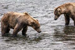 Osos de Katmai Brown; Caídas de los arroyos; Alaska; EE.UU. Foto de archivo libre de regalías