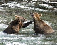 Osos de Katmai Brown; Caídas de los arroyos; Alaska; EE.UU. imagen de archivo