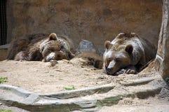 Osos en parque zoológico Imágenes de archivo libres de regalías