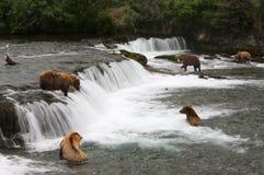 Osos grizzly Fotos de archivo