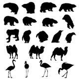 Osos, pingüinos, camello, flamencos stock de ilustración